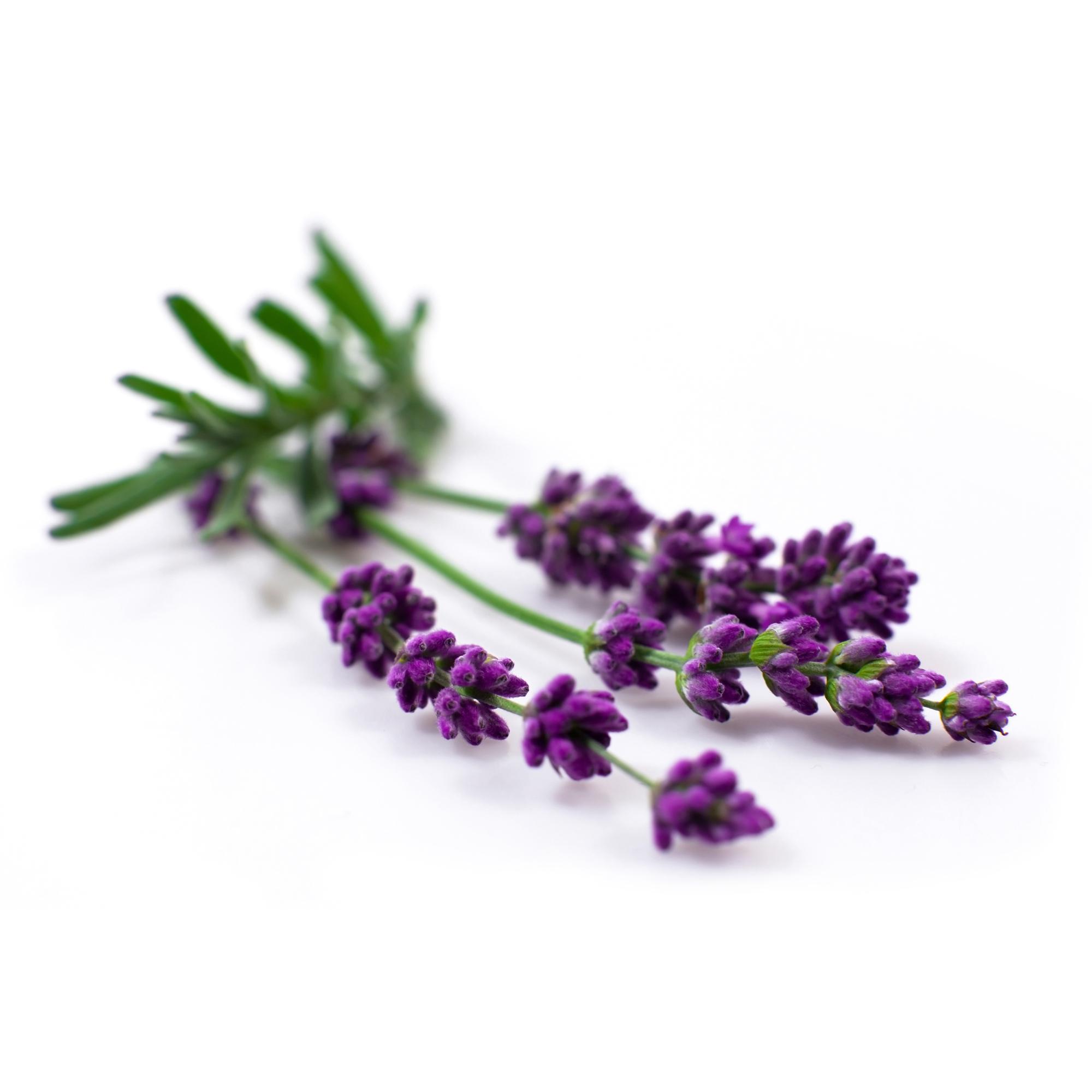 Bio Yogamatten-Reiniger - fresh lavender - 500 ml